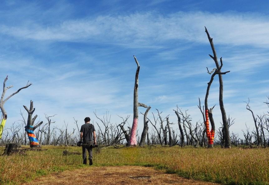 Winton Wetlands; The Hidden Gem of Victoria's NorthEast