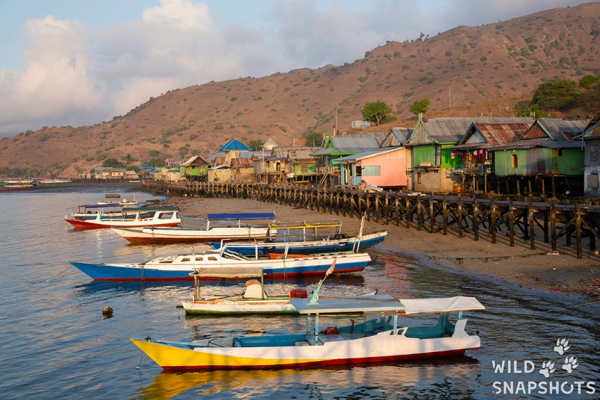 Komodo Island; living with the rangers (and thedragons!)