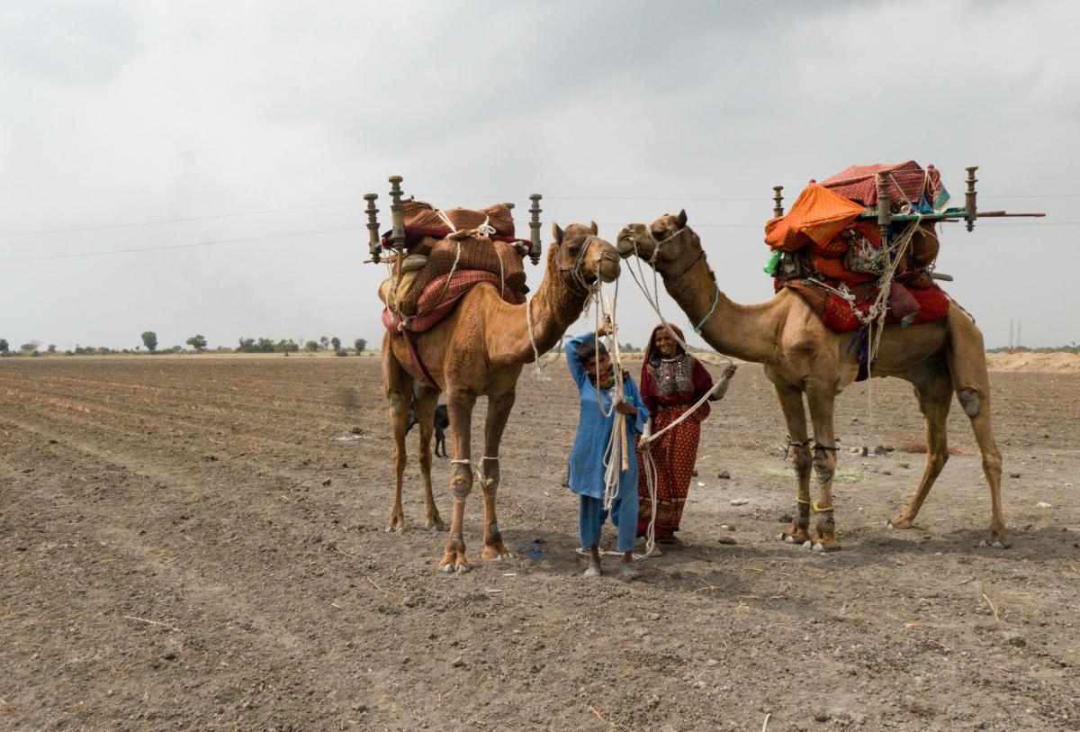 The Nomadic Jath tribe of Gujarat, India